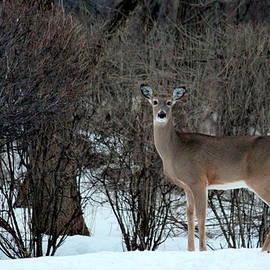 Rosanne Jordan - Naturally Deer