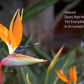 Thomas Woolworth - Nature Does Not Hurry Bird Of Paradise