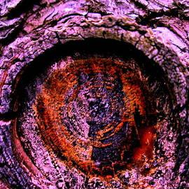 Allen n Lehman - Nature Is Watching