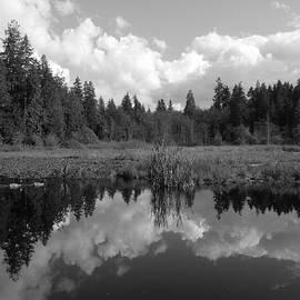 Brian Chase - Nature Mirrored