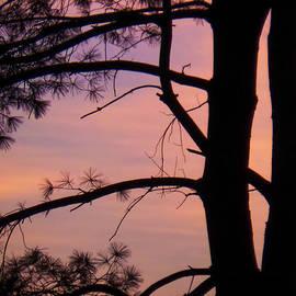 Charlie Cliques - Nature Sunrise
