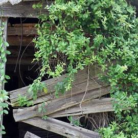 Chuck  Hicks - Nature Takes Over Barn