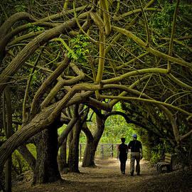 Joseph Hollingsworth - Nature Walk