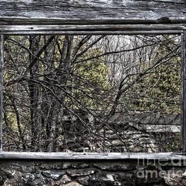 Miss Dawn - Nature Window