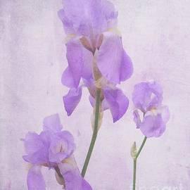 Scott Cameron - Natures Bouquet
