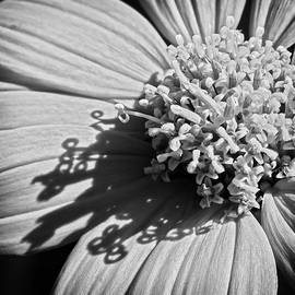 Dawn Currie - Nature