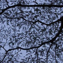 Kandy Hurley - Nature