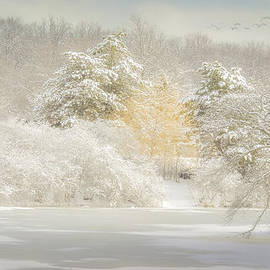 Julie Palencia - Natures Winter Landscape