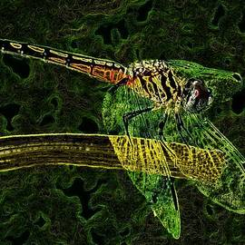 Jeff Mantz Rhodes - Neon Dragon