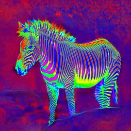 Jane Schnetlage - Neon Zebra