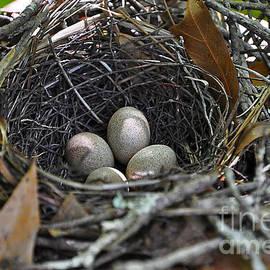 Al Powell Photography USA - Nest Eggs
