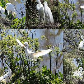 Carol Groenen - Nesting Great Egrets Collage