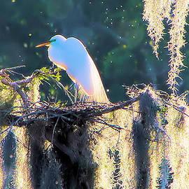 Karry Degruise - Nesting
