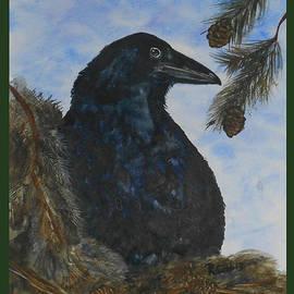 Robin Cobb - Nesting Raven
