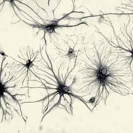 Dan  Cojo - Neuron