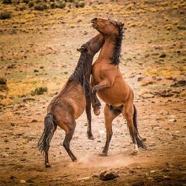 Janis Knight - Nevada Wild Horses 3890