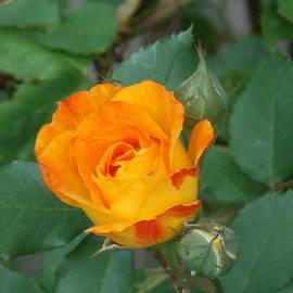 Catherine Gagne - New Bloom