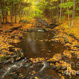 JG Coleman - New England - Bee Brook Autumn