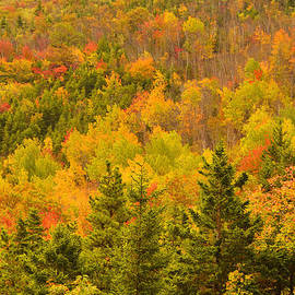 Stephen  Vecchiotti - New England Fall Color Explosion