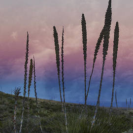 Jean Noren - New Mexico Sunset with Yucca