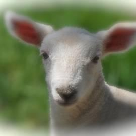 Krista Hott - Spring Lamb