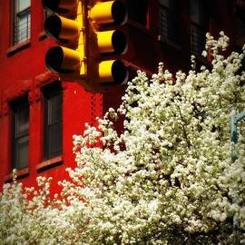 Miriam Danar - New York in Spring - Yellow Red and White