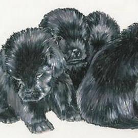 Barbara Keith - Newfoundland Puppies