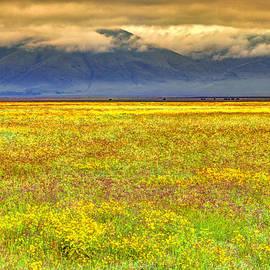 Claudio Bacinello - Ngorongoro