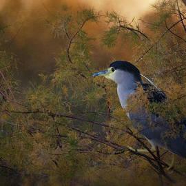 Saija  Lehtonen - Night Heron at Sunset