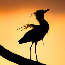 Andres Leon - Night Heron Silhouette 2
