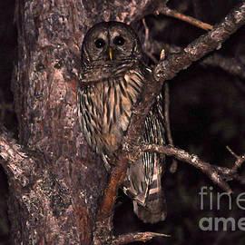 Al Powell Photography USA - Night Owl