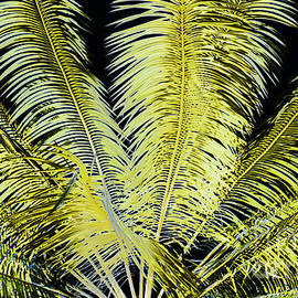 Roselynne Broussard - Night Palm