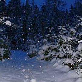 Pavel Jankasek - Night Walk Through The Forest