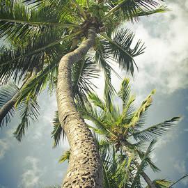 Sharon Mau - Niu - Hoaloha Beach Coconut Palm Kahului Maui Hawaii