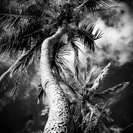 Sharon Mau - Niu - Hoaloha Beach Coconut Palm