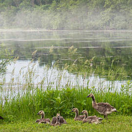 Patti Deters - Geese Family and Morning Mist