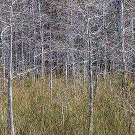 Patti Deters - Winter Cypress