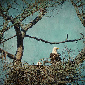 Carla Parris - Noble Pair of American Bald Eagles in Treetop Nest