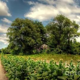 Benanne Stiens - North Carolina Tobacco Farm