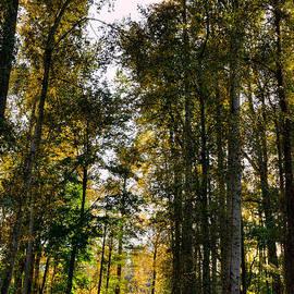 David Patterson - North Lions Park - Mount Vernon Washington