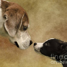 Linsey Williams - Nose To Nose Dogs