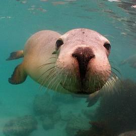 Crystal Beckmann - Nosey Sea lion
