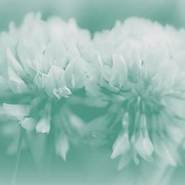 Mother Nature - Not-So-White White Clover