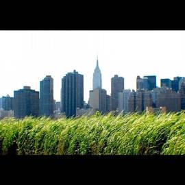 Natalia Weiss - Not The Central Park. New York