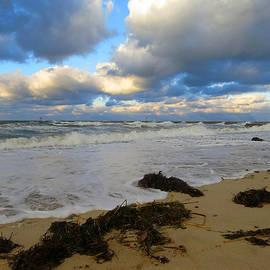 Dianne Cowen - November Clouds