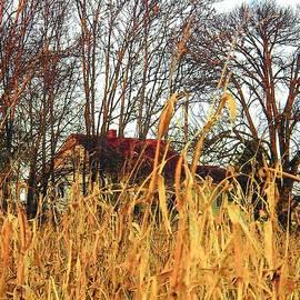 Joyce Kimble Smith - November Corn
