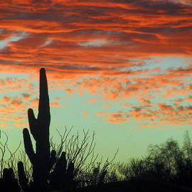 Selma Glunn - November Sunset