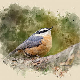Christina Rollo - Nuthatch Watercolor Art