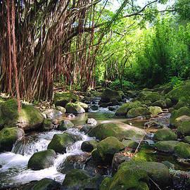 Kevin Smith - Banyan Nuuanu Stream Hawaii