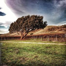 John Aguillon - Oak and Wine